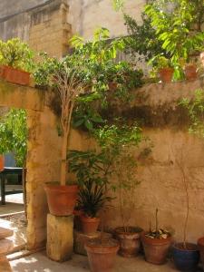 Silvestro's garden
